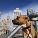 Detroit riverfront dog